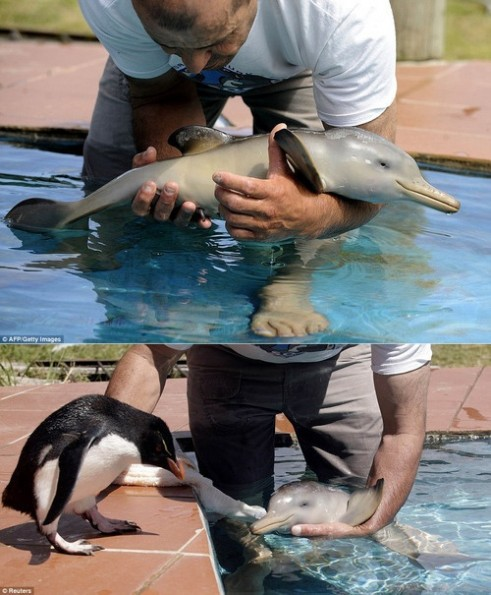 Cuteness overload: baby dolphin meets...